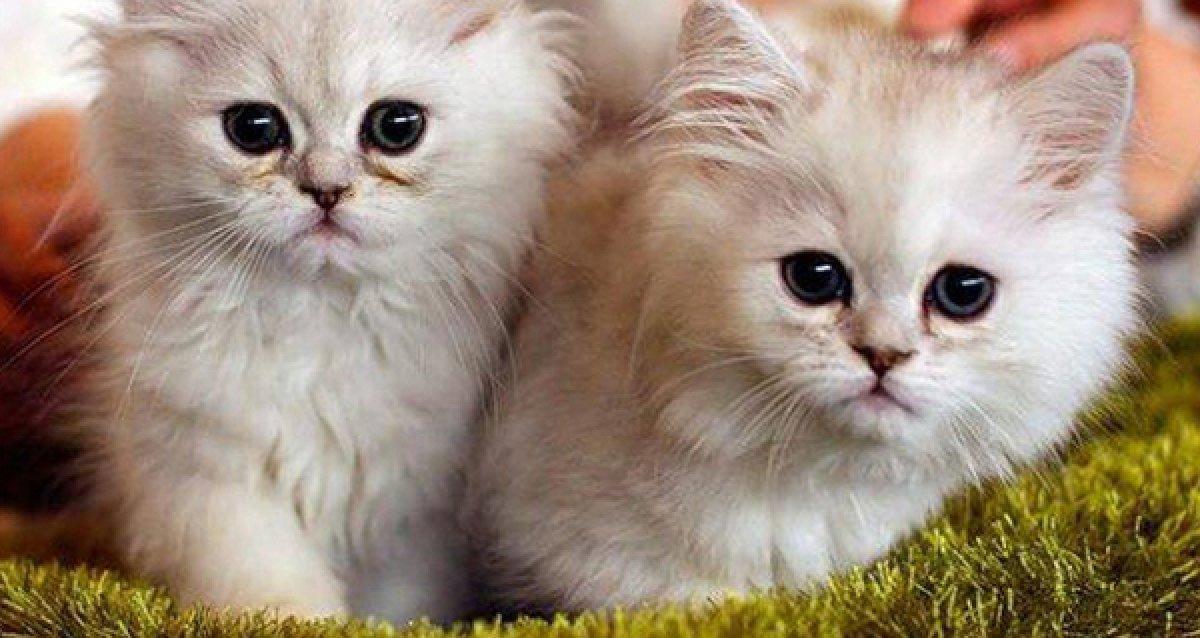 -50% на билет на выставку кошек