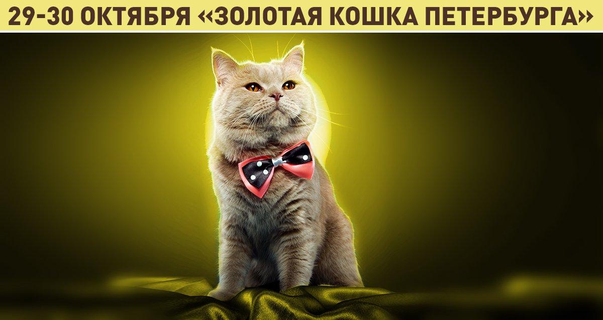 29-30 октября выставка «Золотая кошка Петербурга»! От 100 р. за билет