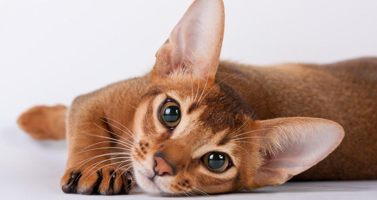 -50% на международную выставку кошек