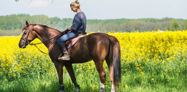-56% на конные прогулки от КСК «Тандем»