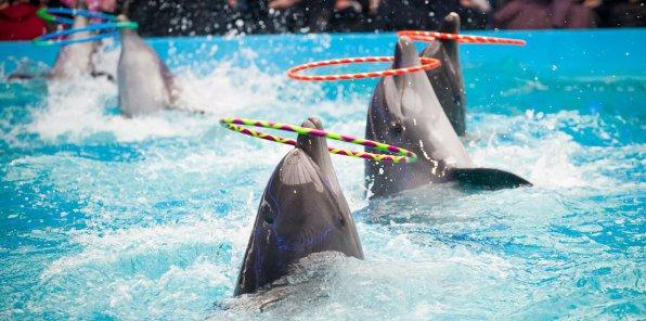-50% на новое шоу дельфинов «Галактика Дельфус»