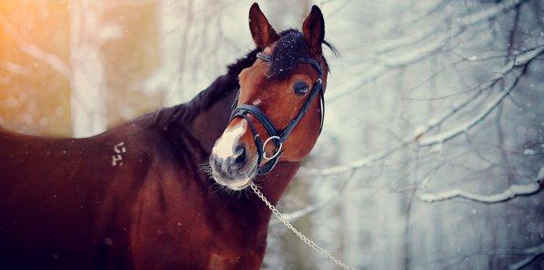 Скидки до 51% на конные прогулки в Петергофе