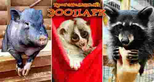 Скидка 50% на билеты в «Трогательный зоопарк»