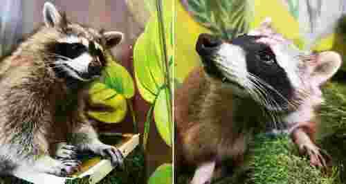 Скидки до 51% от контактного зоопарка «Друг Енот»