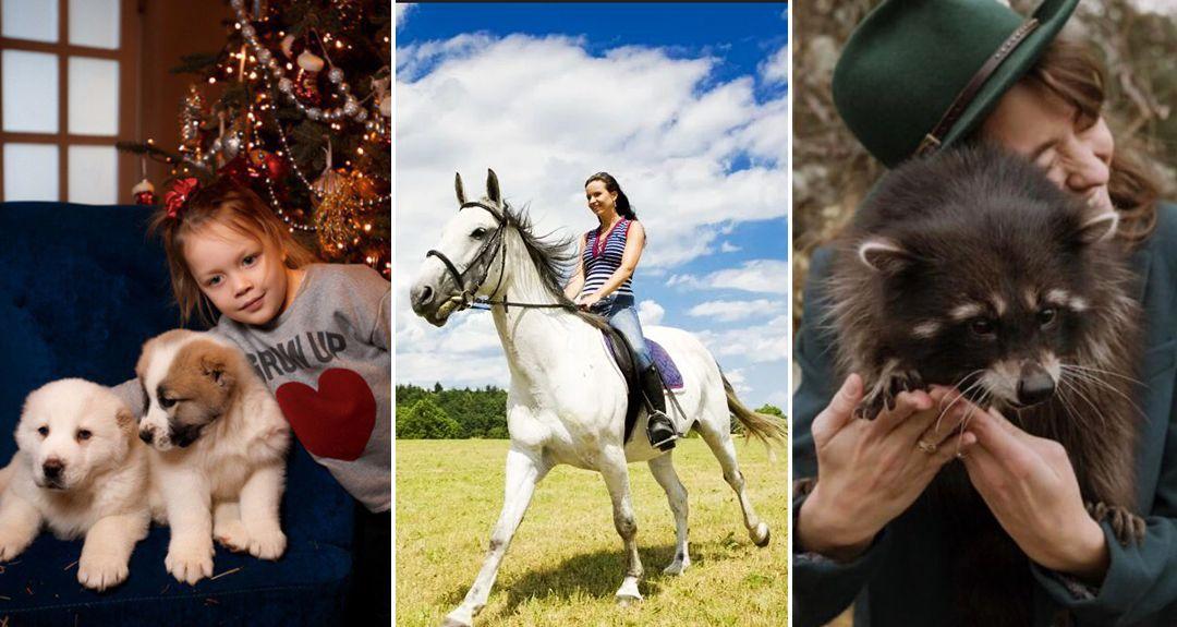 Скидки до 75% на конные прогулки, фотосессии, банкетную площадку для праздников