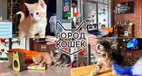 Скидка 50% на посещение лофта «Город кошек»