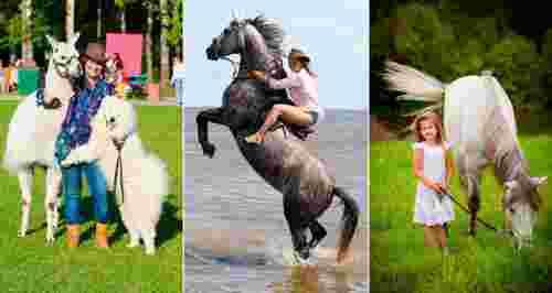 Скидки до 50% на все в конном клубе «Авенсис»