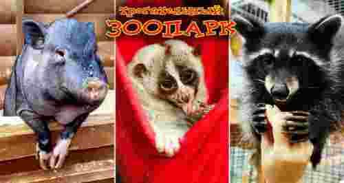 Скидка 50% на посещение «Трогательного зоопарка»