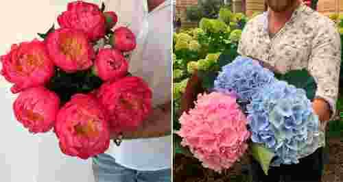 Скидки до 50% в цветочной лавке Premium Flowers