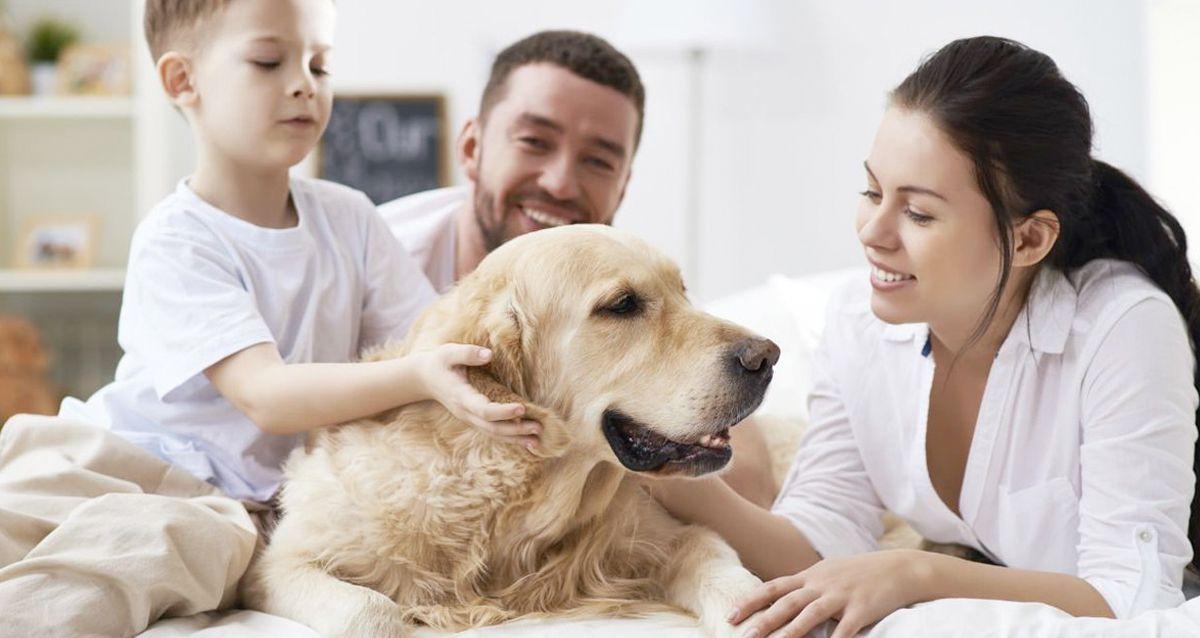 5 правил ухода за домашними животными летом