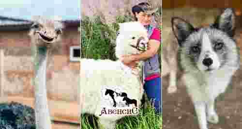 Скидка 30% на посещение и экскурсию на ранчо «Авенсис»